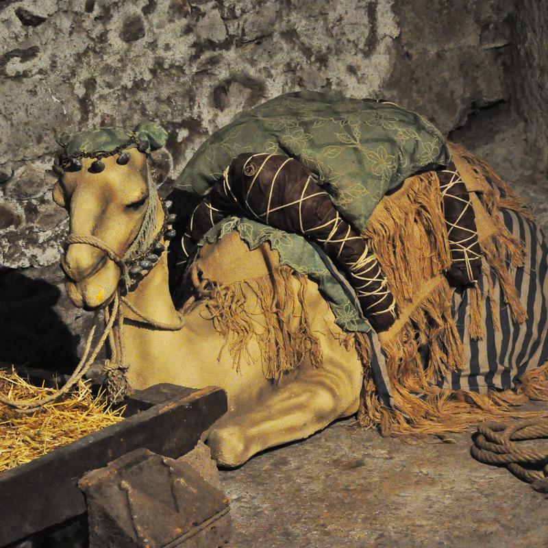 il cammello e la fune